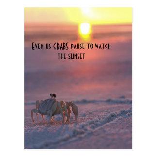 Crabe observant le coucher du soleil carte postale