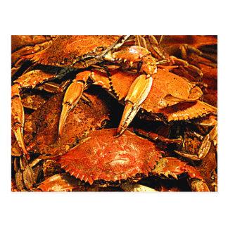 Crabes durs cuits à la vapeur du Maryland Carte Postale