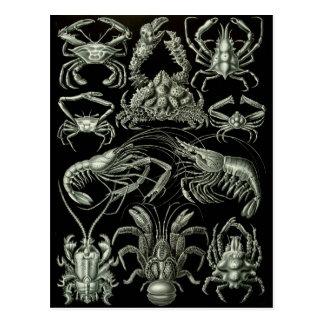 Crabes et homards carte postale