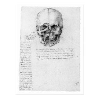 Crâne 002 de Leondardo da Vinci Carte Postale