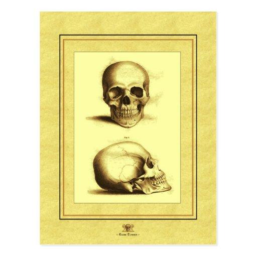 Crânes antiques jumeaux cartes postales