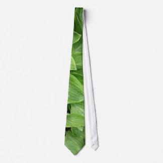 Cravate #1 de Hosta