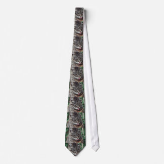 Cravate chat américain de wirehair