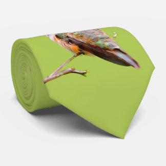 Cravate Colibri Rufous se reposant dans le lilas de la