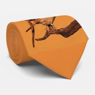 Cravate faisan d'Anneau-cou (le Dakota du Sud)