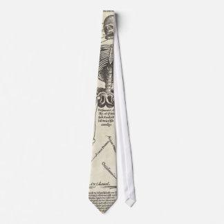 Cravates Anatomie de la Renaissance