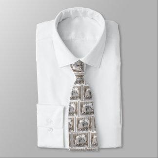 Cravates Keeshonds à la porte