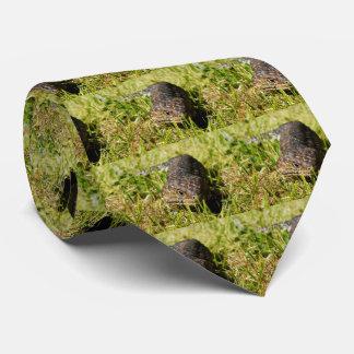 Cravates Lézard de la fièvre catarrhale ovine