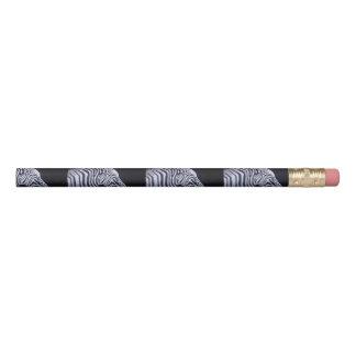 crayon de zèbre