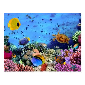 Créatures colorées de récif coralien carte postale