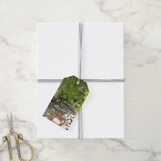 Crique II de chêne dans la photographie de nature Étiquettes-cadeau