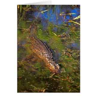 Crocodile dans l'eau cartes