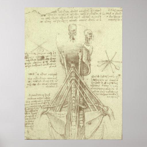 Croquis d'anatomie de colonne vertébrale Leonardo  Affiche
