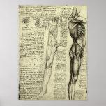 Croquis masculin d'anatomie de muscle par Leonardo Posters