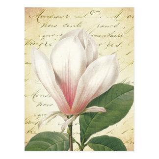 Cru de fleur de magnolia botanique cartes postales