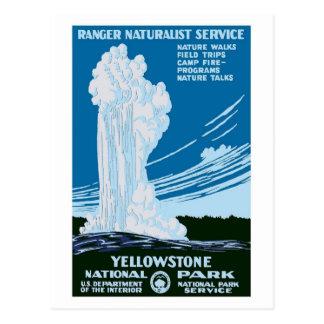 Cru de parc national de Yellowstone Carte Postale