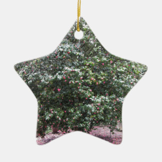 Cultivar antique de fleur de cognassier du Japon Ornement Étoile En Céramique