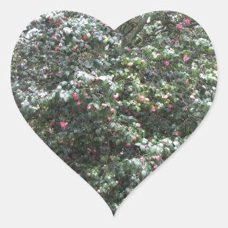Cultivar antique de fleur de cognassier du Japon Sticker Cœur