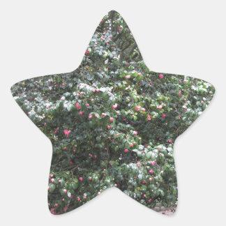 Cultivar antique de fleur de cognassier du Japon Sticker Étoile