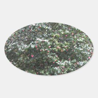 Cultivar antique de fleur de cognassier du Japon Sticker Ovale