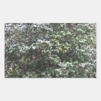 Cultivar antique de fleur de cognassier du Japon Sticker Rectangulaire
