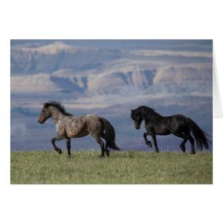 Custer et galaxie - carte de voeux de cheval