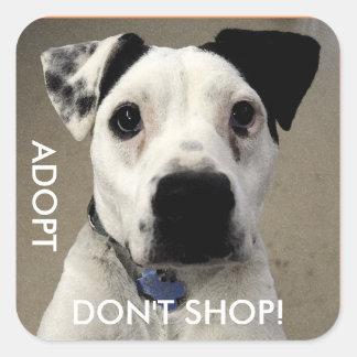 Cute Ted de dérision pup - Adopt, don't magasin Sticker Carré