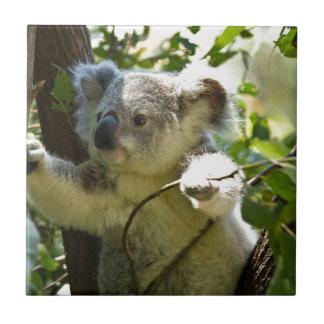 Cutie de koala petit carreau carré