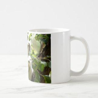 Cutie de koala mugs à café