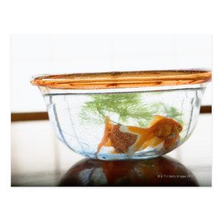 Cuvette de poisson rouge cartes postales