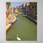 Cygnes dans le canal, île de Burano, Venise, Itali Poster