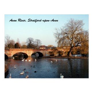Cygnes sur la rivière Avon, Stratford-sur-Avon Carte Postale