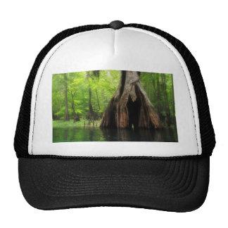 Cypress creux massif casquettes