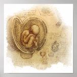 da Vinci - croquis d'embryon Affiches