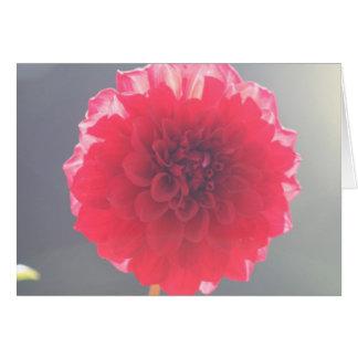 Dahlia 2 carte de vœux