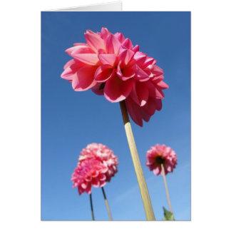 Dahlia, angle faible de fleurs grandes de rose carte de vœux