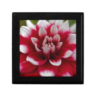 Dahlia rouge et blanc (hortensis de dahlia X) Boîte À Souvenirs