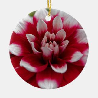Dahlia rouge et blanc (hortensis de dahlia X) Ornement Rond En Céramique