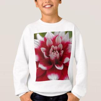 Dahlia rouge et blanc (hortensis de dahlia X) Sweatshirt