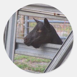 Daine alpine noire de chèvre attendant à la porte adhésif rond