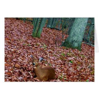 Daine de carte de note de région boisée un cerf