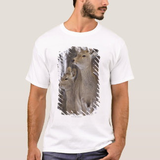 Daine de cerfs communs de Sika et jeune, Hokkaido, T-shirt