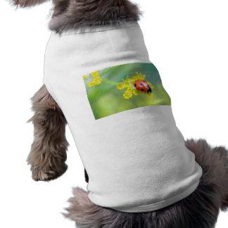 dame sur le dessus t-shirt