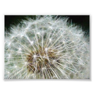 dandilion impressions photo