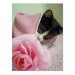 dans le chaton de couverture de poupée carte postale