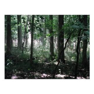 Dans les bois carte postale