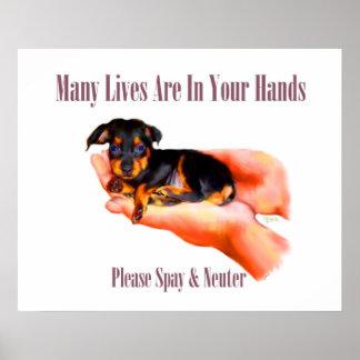 Dans votre copie de mains (stérilisez svp et posters