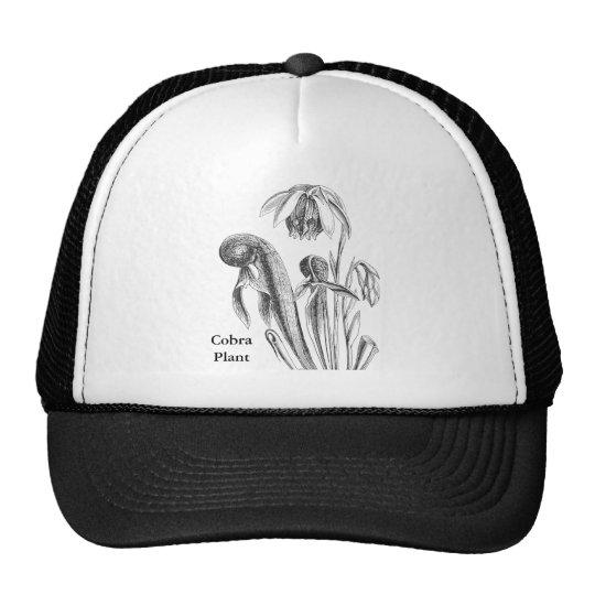Darlingtonia d'usine de broc casquette de camionneur