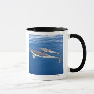 Dauphin commun dans le détroit mugs