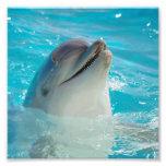 Dauphin heureux de natation